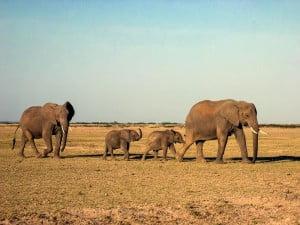 elefantmødre (2)